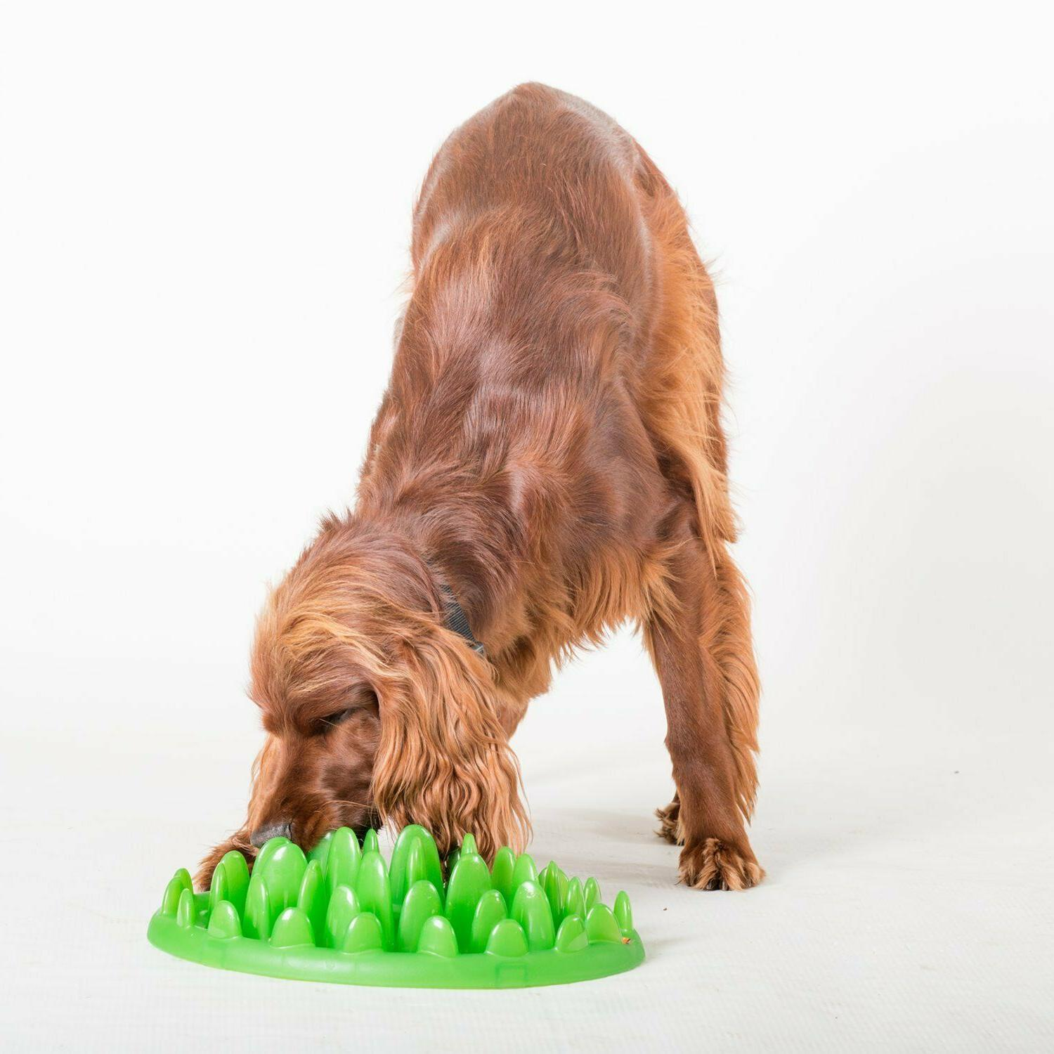 """Northmate Green Slow Feeder Dogs Mini 11"""" NWOB Puzzle"""